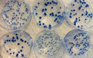 cytotoxicity-tools